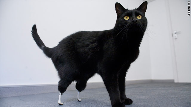 First Cat Amputee Fitted With 'Bionic' Feet