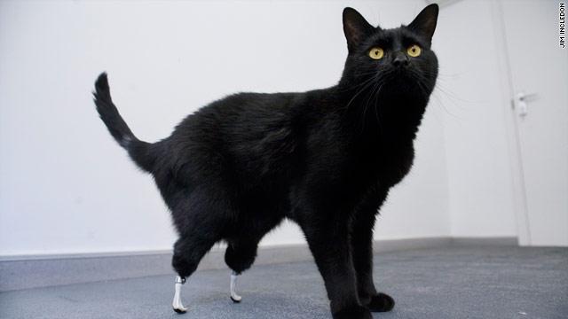 bionic feet