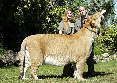 Liger Top Ten Modern Inventions of 21st Century