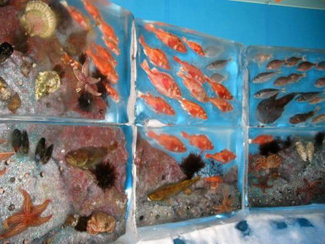 Frozen-Aquarium8