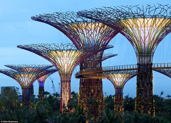 Singapore Gardens by the Bay Supertrees 01 thumb 550xauto 93426 The Mechanical Forests