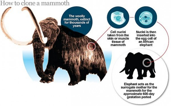 clone 600x375 Scientists To Bring Dead Mammoth Back To Life