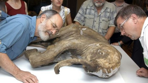 mammoth cloning 600x338 Scientists To Bring Dead Mammoth Back To Life