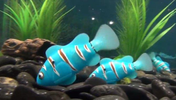 5072b92b536b8 600x339 Robotic Pet Fish Available For Your Aquarium Now