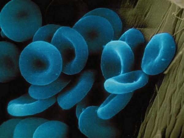 Blue Blood Cells