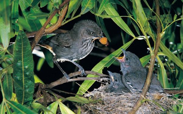 Mother Birds