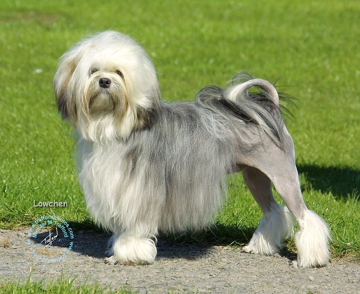 Top 10 most expensive dog breeds | REALITYPOD