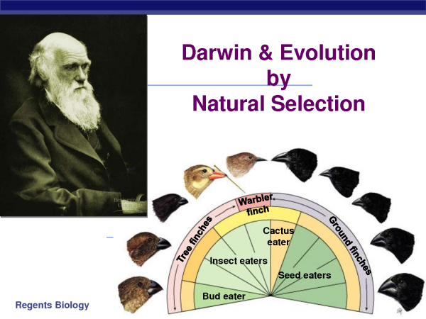the principles of charles darwins theory of natural selection Darwins theory of evolution by natural selection  reads lyells principles of  charles darwin natural selection - studied the galapagos finches beaks of.