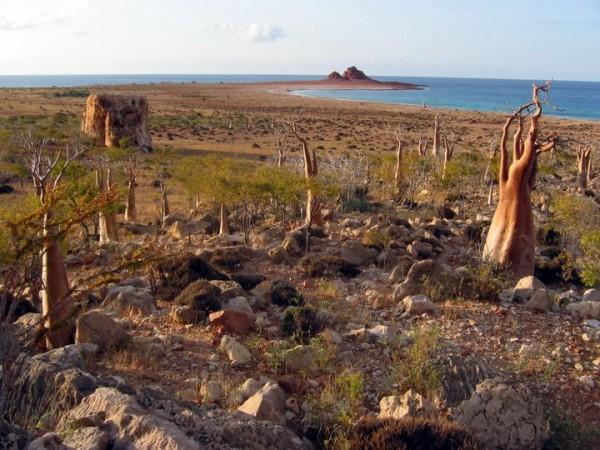 8. Socotra Island, Yemen