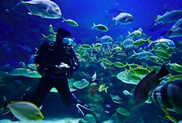 8. Scuba Diving