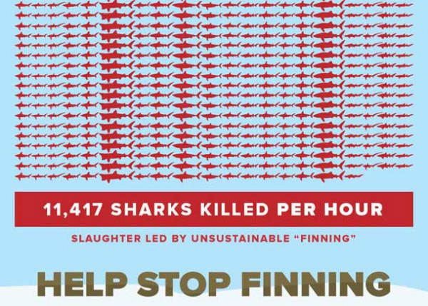 01-Shark-Attack-Stop-Finning-Infographic_01
