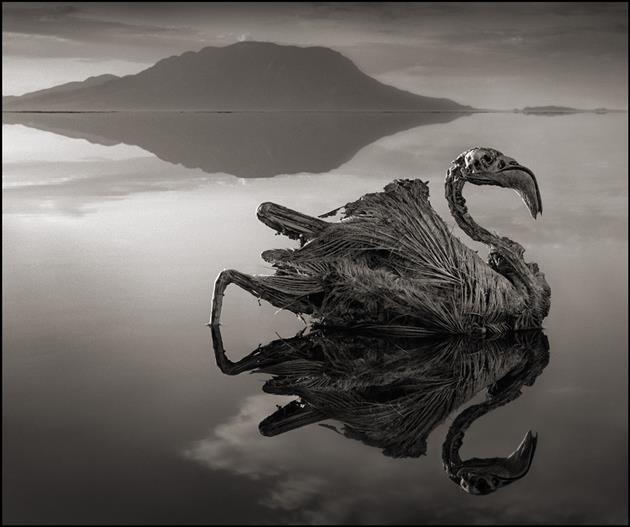 The Terrifying Lake That Turns Animals Into Stone