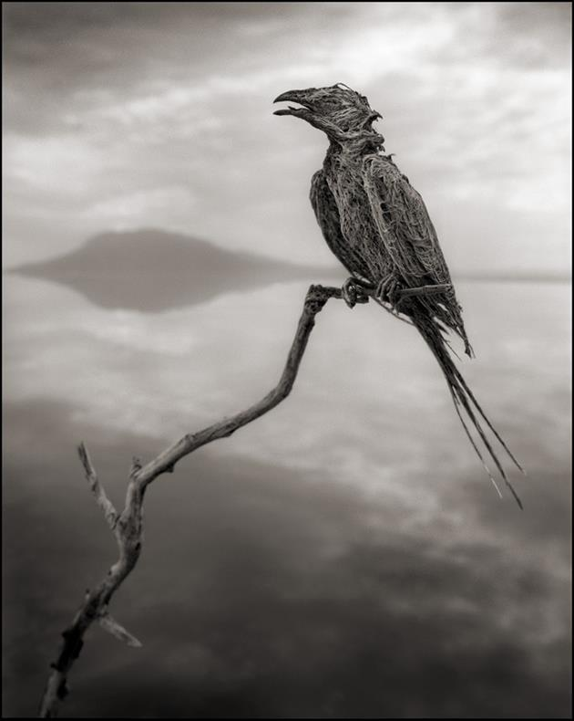 Deadly-Lake-Turns-Animals-Into-Stone-Statues-in-Africa-2