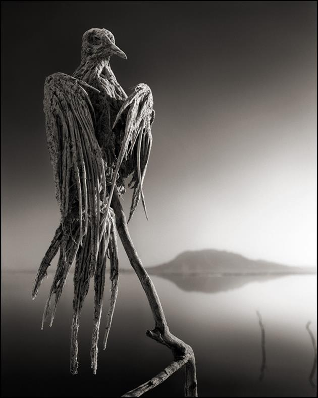 Deadly-Lake-Turns-Animals-Into-Stone-Statues-in-Africa-3