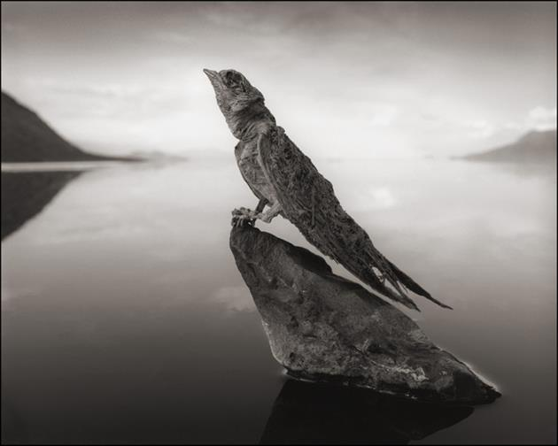 Deadly-Lake-Turns-Animals-Into-Stone-Statues-in-Africa-4