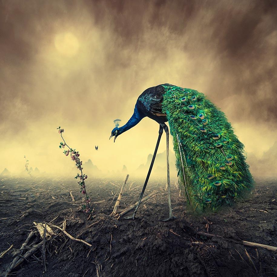 surreal-dream-photos-caras-ionut-6