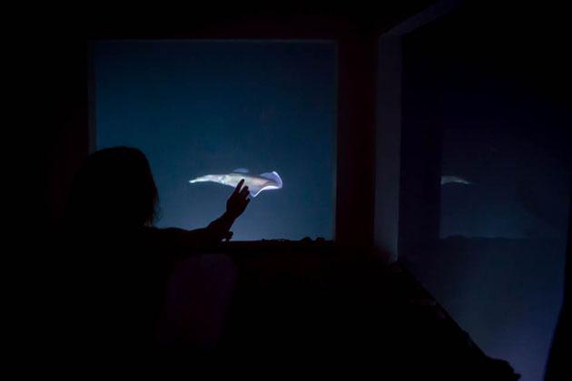 Underwater-Floating-Hotel-Room-at-Manta-Resort-6