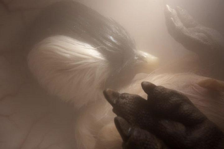 animals_in_utero_09