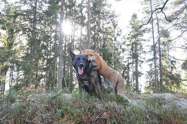 unusual-animal-friendship-1-4