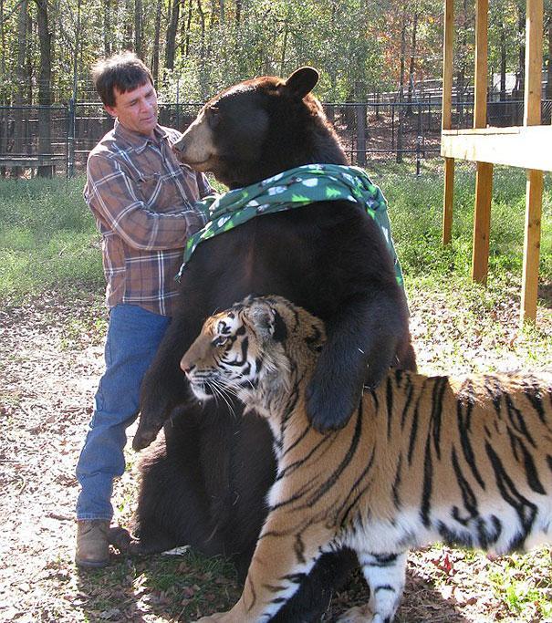 unusual-animal-friendship-11-2