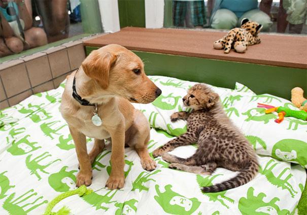 unusual-animal-friendship-12-1