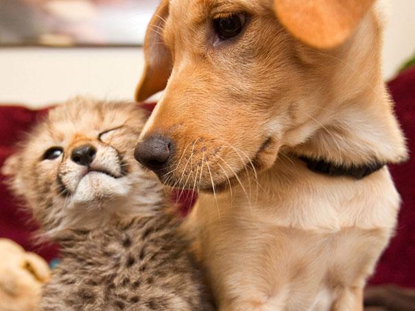 unusual-animal-friendship-12-2