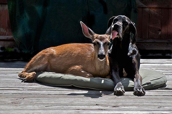 unusual-animal-friendship-14-1