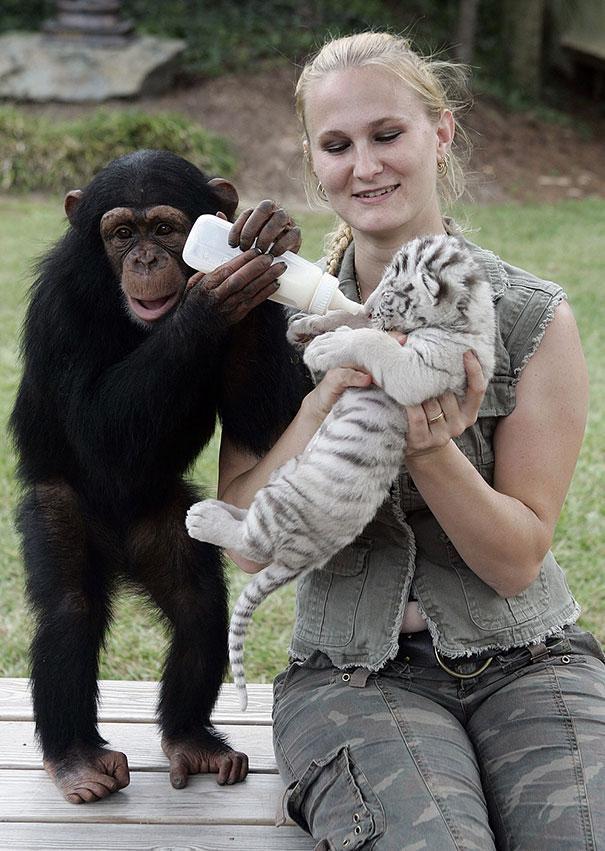 unusual-animal-friendship-15-3