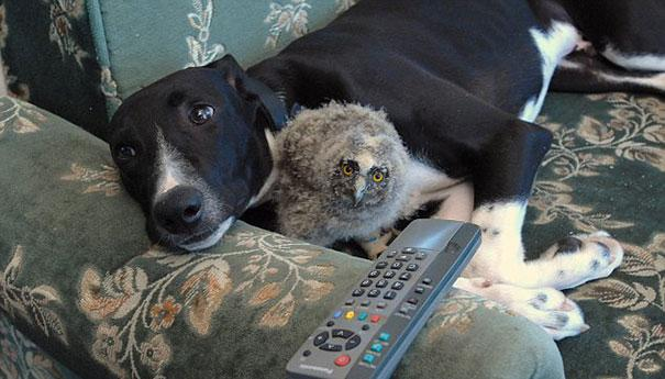 unusual-animal-friendship-2-2