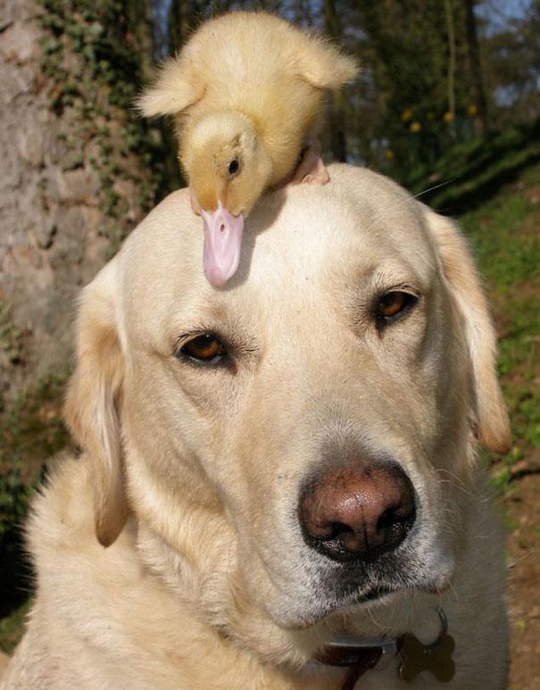 unusual-animal-friendship-4-1