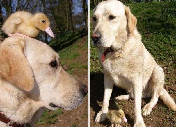 unusual-animal-friendship-4-2