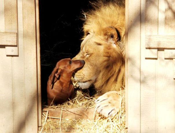 unusual-animal-friendship-6-1