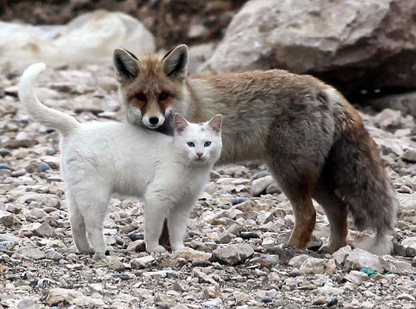 unusual-animal-friendship-7-1