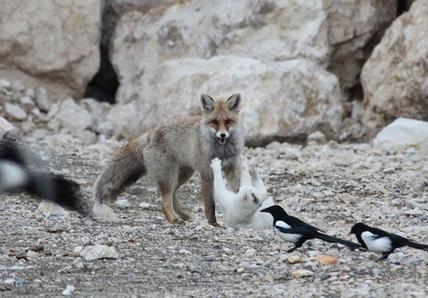 unusual-animal-friendship-7-2