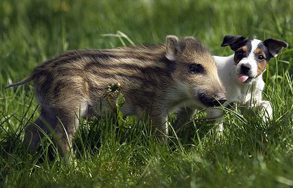 unusual-animal-friendship-8-1