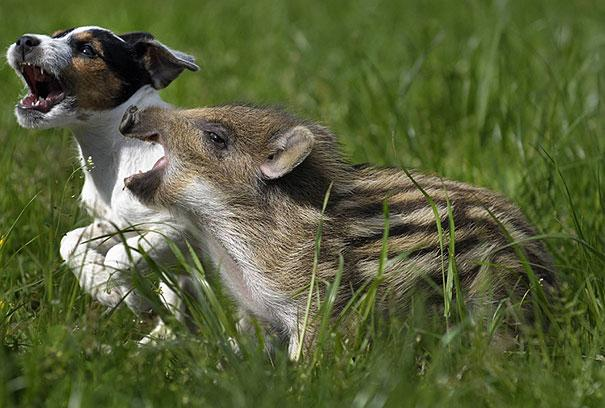 unusual-animal-friendship-8-2