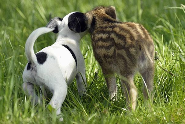 unusual-animal-friendship-8-3