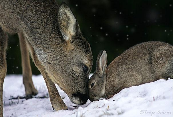 unusual-animal-friendship-9-1