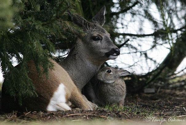 unusual-animal-friendship-9-2