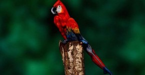 parrot-optical-illusion-body-art-johannes-stoetter-1