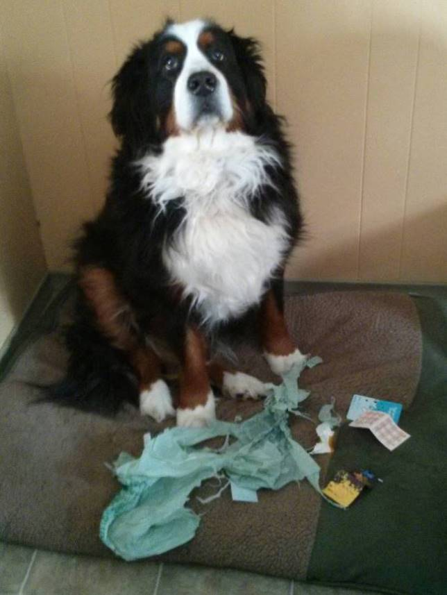 guilty-dog-1