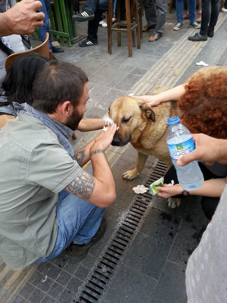 7. A dog suffering the effects of teargas gets help from Turkish protesters during a clash with police