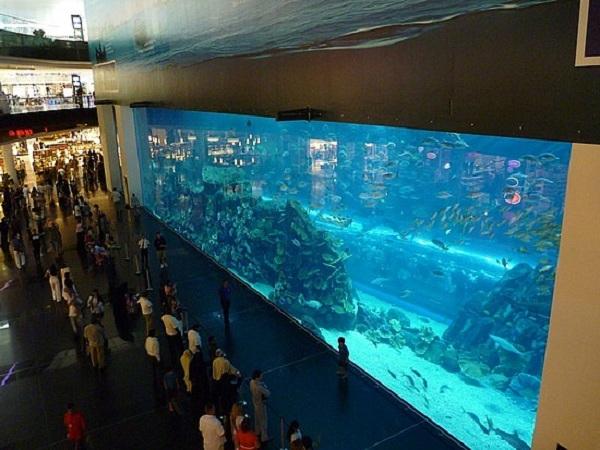 dubai mall aquarium viewing  panel