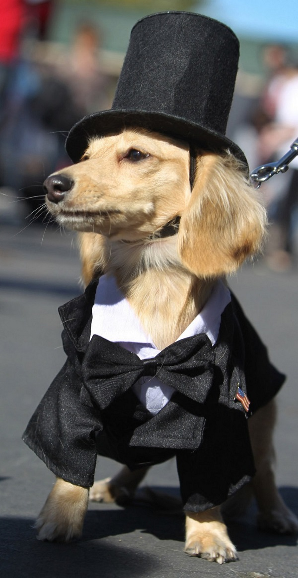 abraham lincoln dog