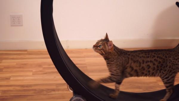 onefastcat