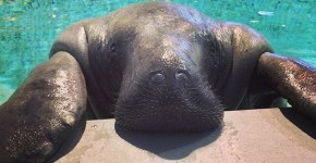 Snooty was born in 1948 – when Harry S. Truman was President in the U.S.