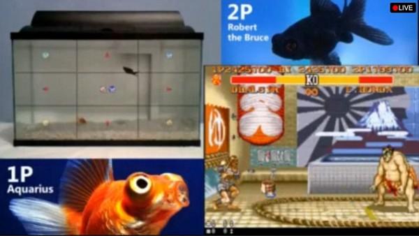 fish SF1