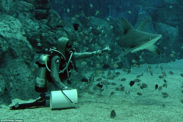 wps_3_Cristina_Zenato_a_shark_c