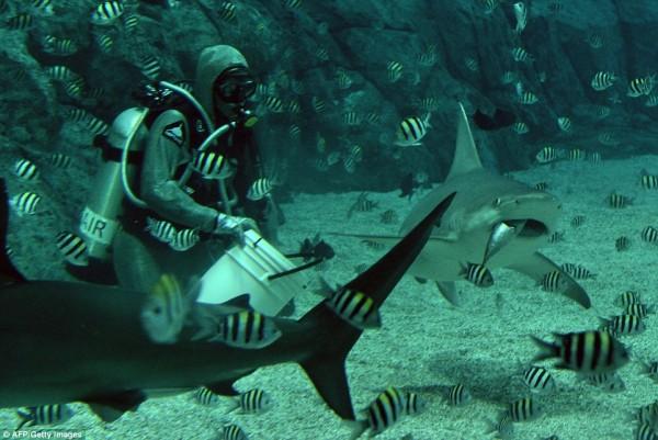 wps_5_Cristina_Zenato_a_shark_c