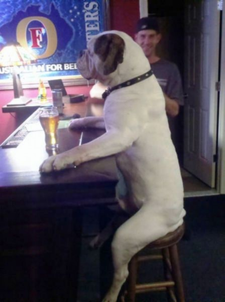 Dog Act Like Human 2